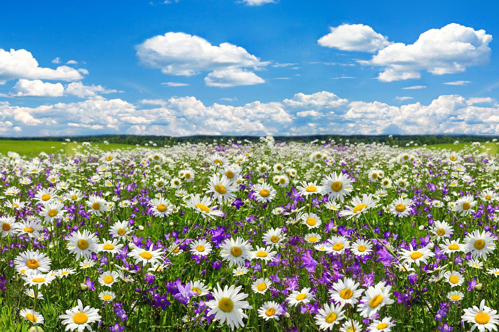 Características de la Primavera