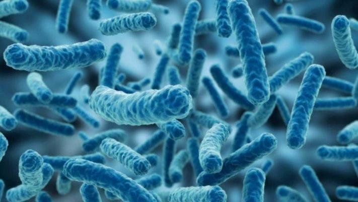 Características de los organismos unicelulares