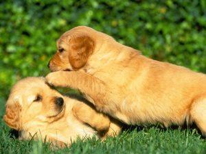 Características de un Perro