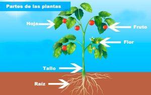 Características del reino plantae