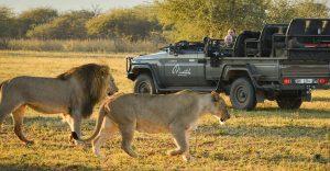 Características Principales de Safari