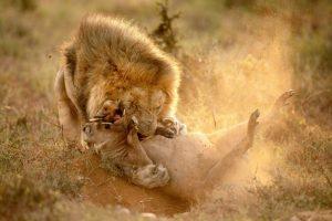5 características de un León