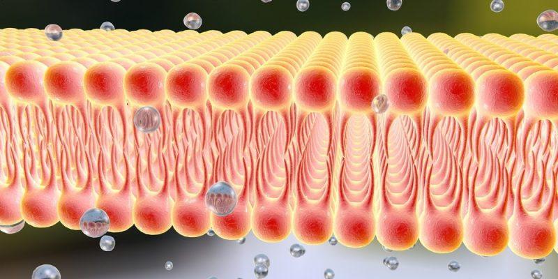 Características de la Membrana Celular